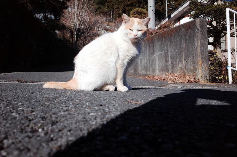 奥多摩むかし道の猫
