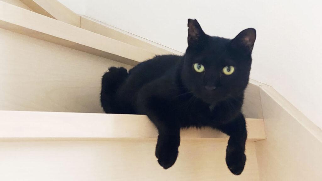黒猫氏をお迎えして、ちょうど3ヵ月が経ちました。