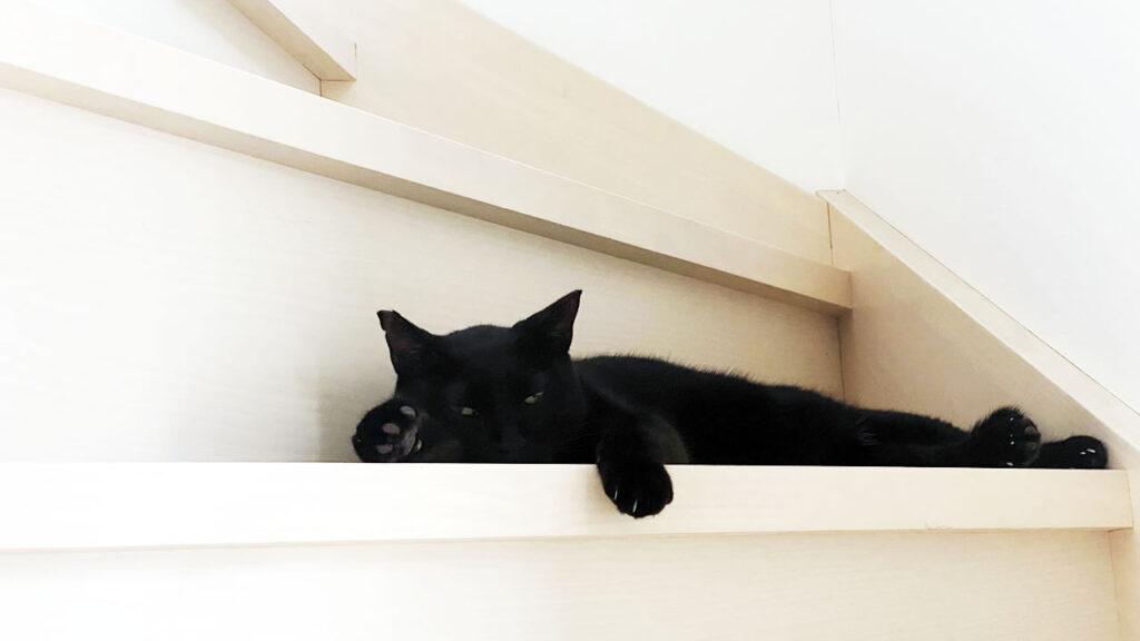 前回の訪問から1週間、黒猫氏を再び動物病院へ連行した