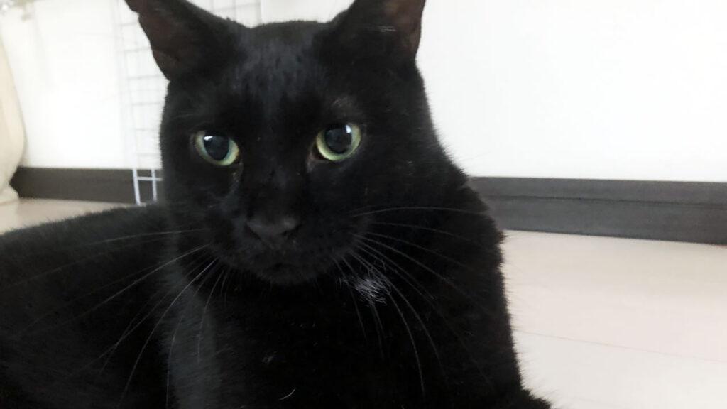 黒猫氏、5ヵ月目の記録