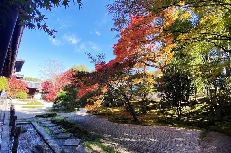 天寿庵の紅葉を混雑なく見られるのはコロナの今だけ