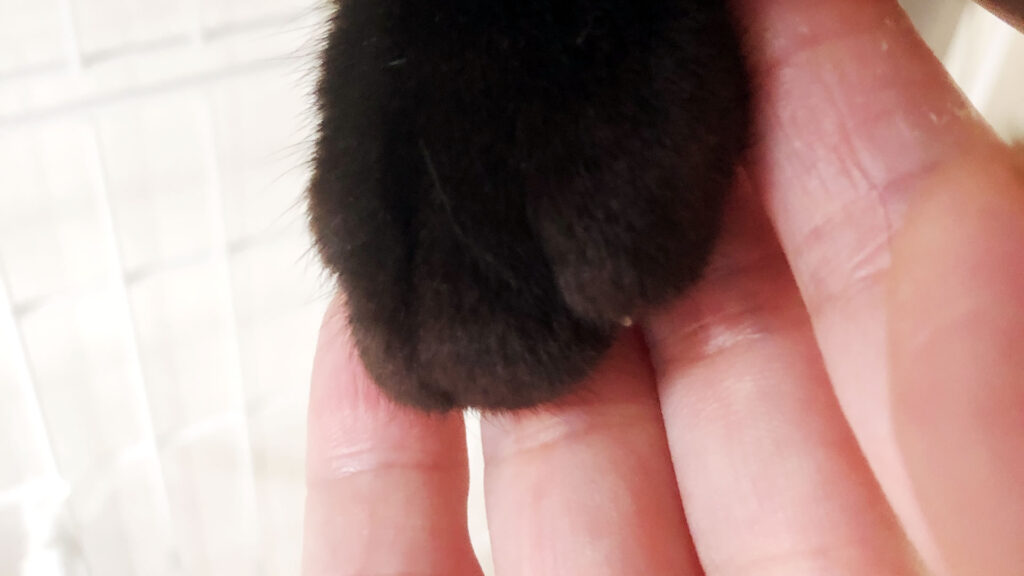 生粋の野良猫を保護して1ヵ月が経ちました!