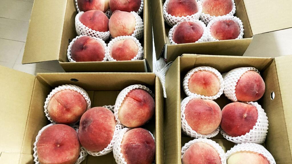 今回の成果物は桃4箱!