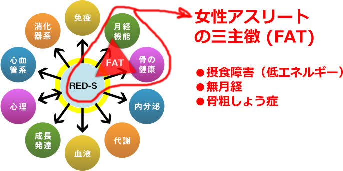 RED-S:Relative Energy Deficiency in Sportの概念図