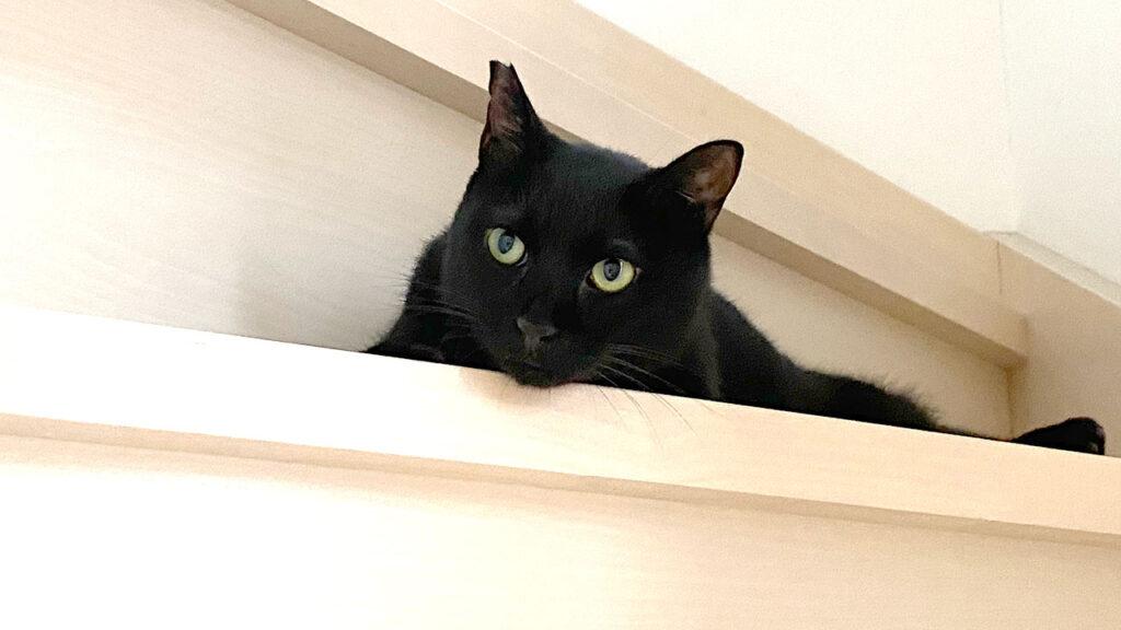 すまない、黒猫氏! ローラー部屋を貸してくれ