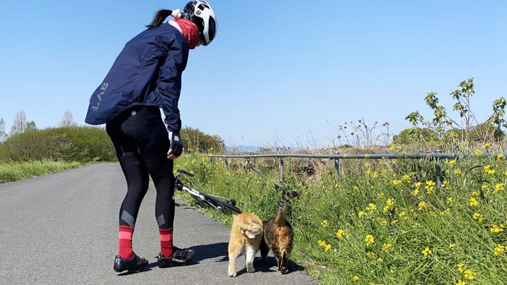 埼玉県民、猫を大切にするお人柄