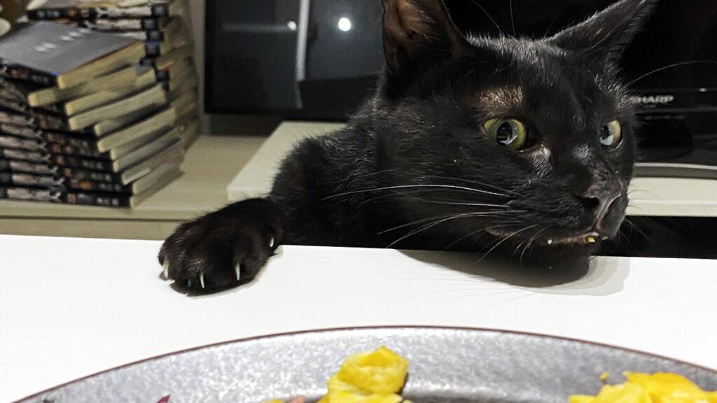 黒猫氏はすでに我が家の中心的存在