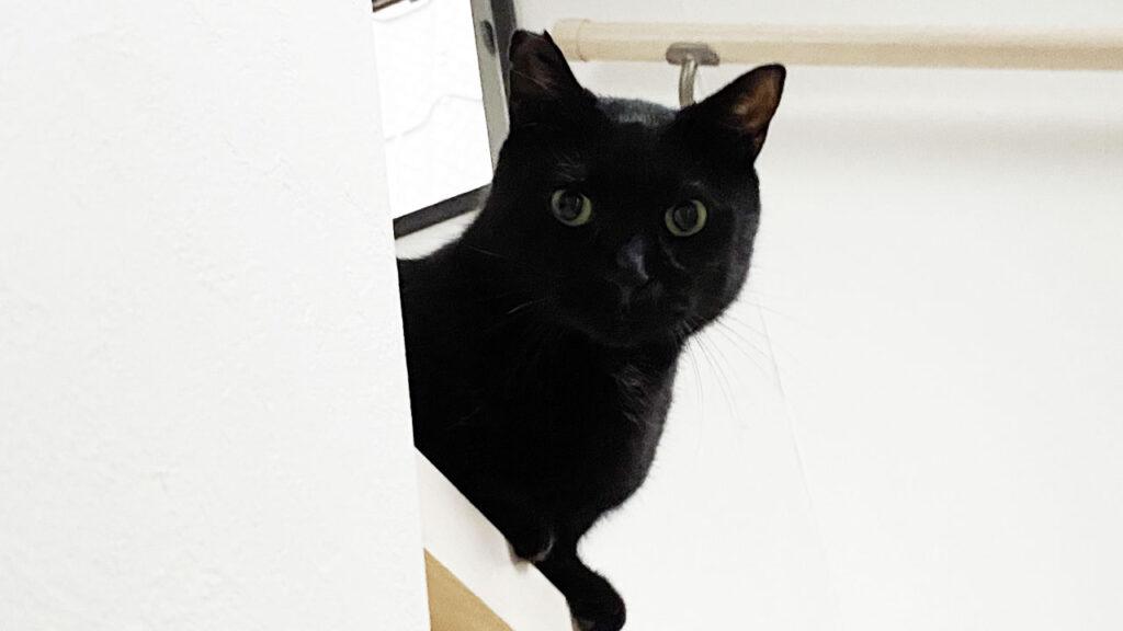 お家でZWIFTも良いもんだよ、黒猫氏と一緒にいられるから