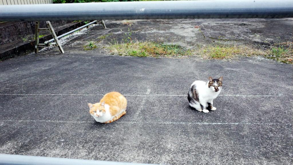 猫がいたので、ここには何かあると思いました(´_ゝ`)