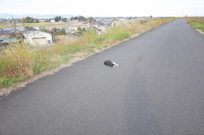 土手沿いの道に誰かが倒れてる!