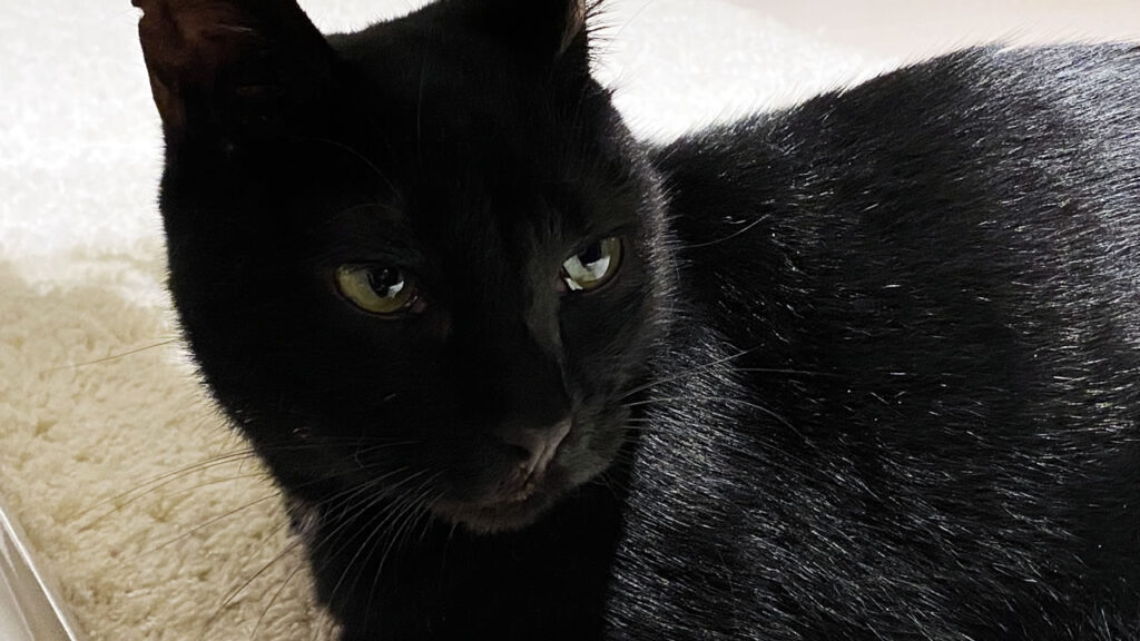 家庭内野良な黒猫氏はお薬を飲めるのか!?