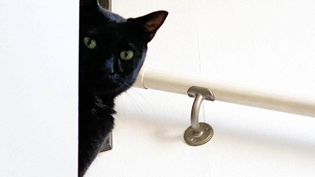 警戒心むき出しの黒猫氏(;^_^A