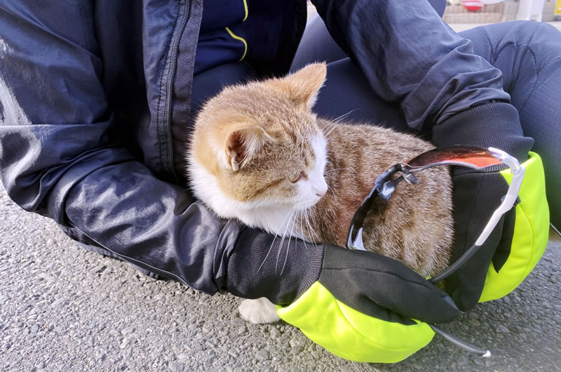榎本牧場の猫の元気な姿にデゲメン氏大歓喜