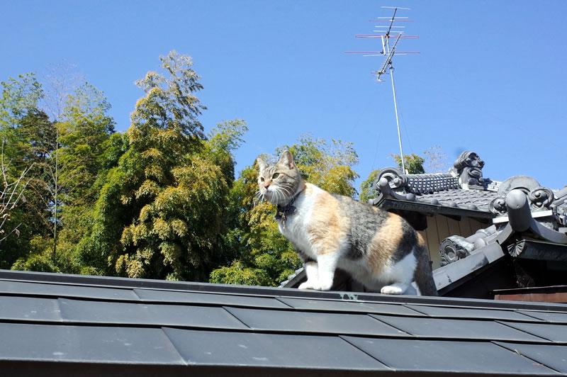 前玉神社に来た理由は猫に会うため