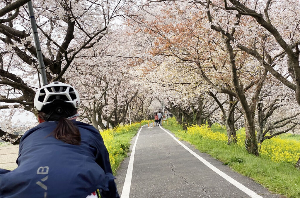 土手の上を走れば、200本以上の桜のシャワーを浴びれます。