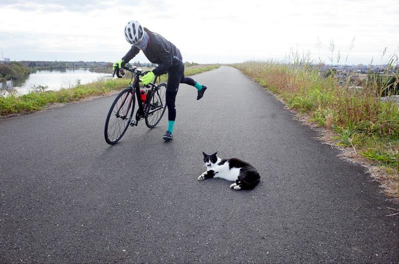 猫を発見して大喜びのデゲメン氏