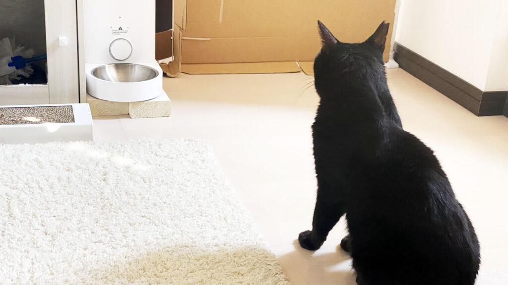 MTBレースに向けて黒猫もスタンバってます(´_ゝ`)