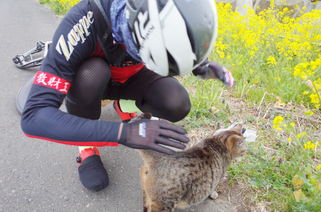 このワシが猫の歓待を受けるなんて!
