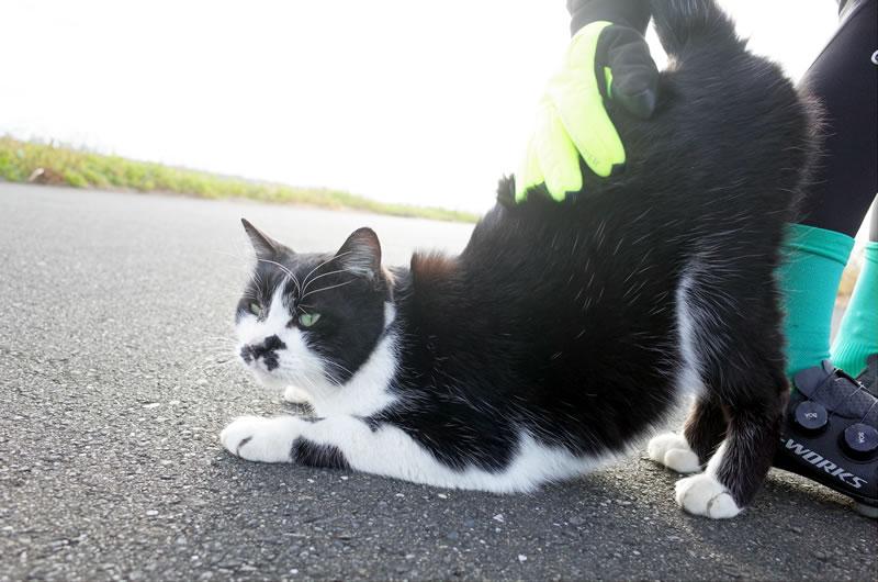 とても懐っこい猫にデゲメン氏大喜び