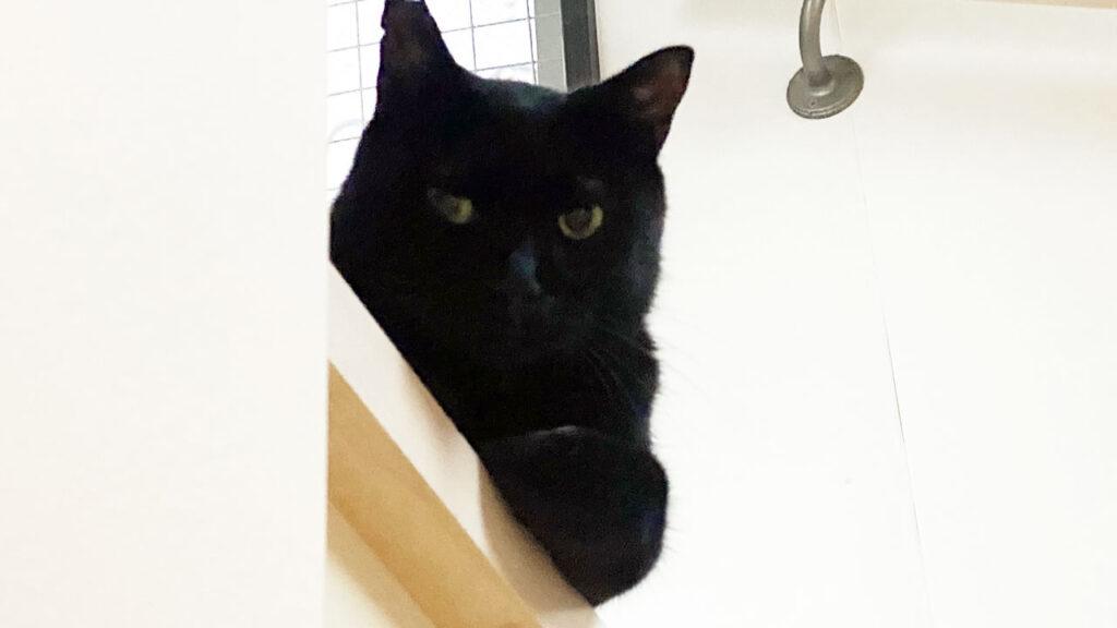 人間がZwiftを始めるとふてくされる黒猫氏(かわいい)