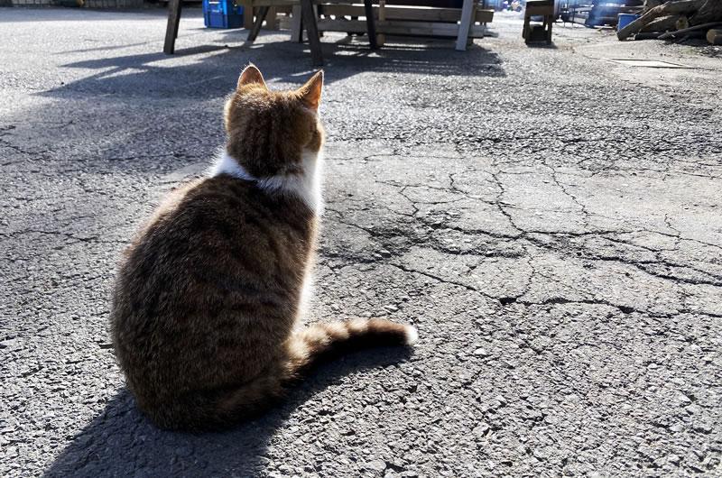 榎本牧場の猫たちが元気そうで本当に良かった(*´ω`)