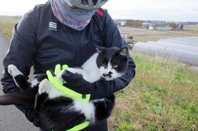 荒サイの猫、全然嫌がりません