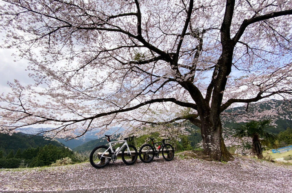 Tarmac SL7とVengeと八徳の一本桜