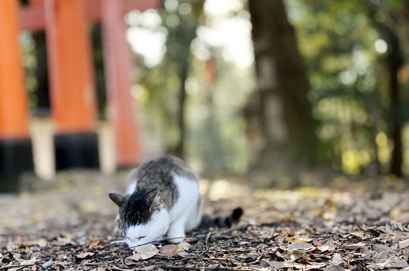 伏見稲荷で猫との遭遇