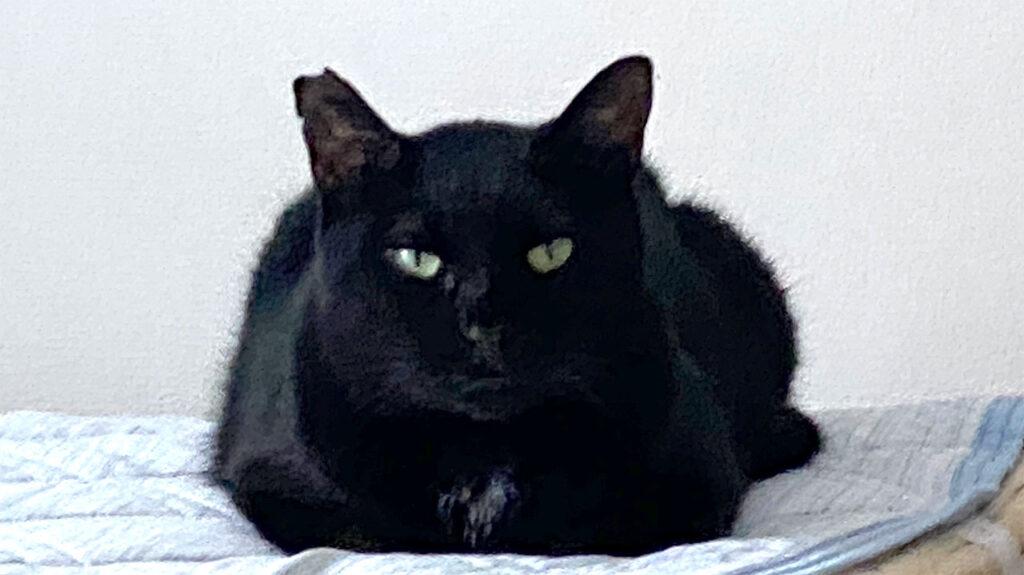 ご立腹な黒猫氏