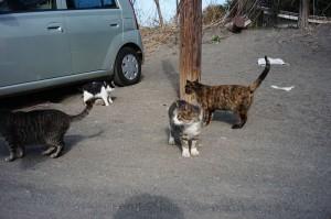 「お、人間だ、食い物よこせ」と、猫様が寄ってきた^^