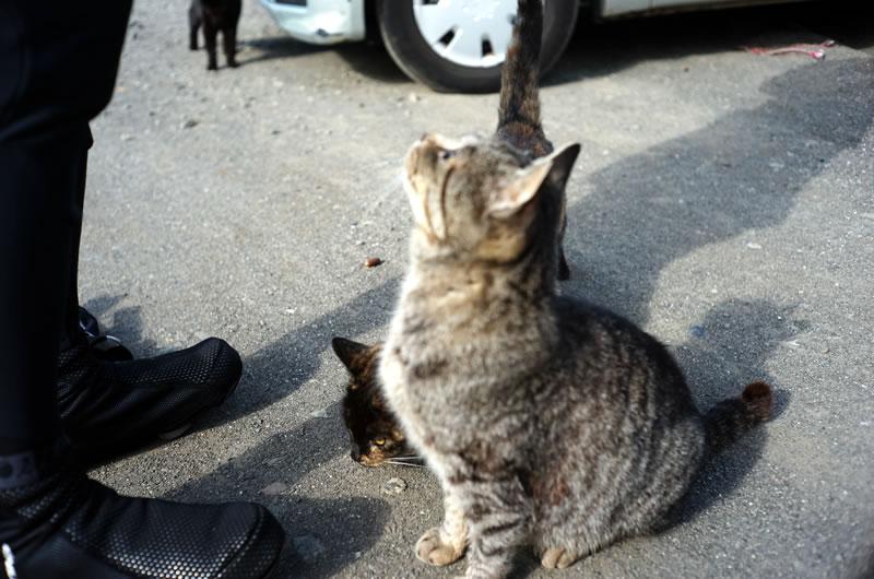 「オイ、食べ物よこせ」と仰る猫様