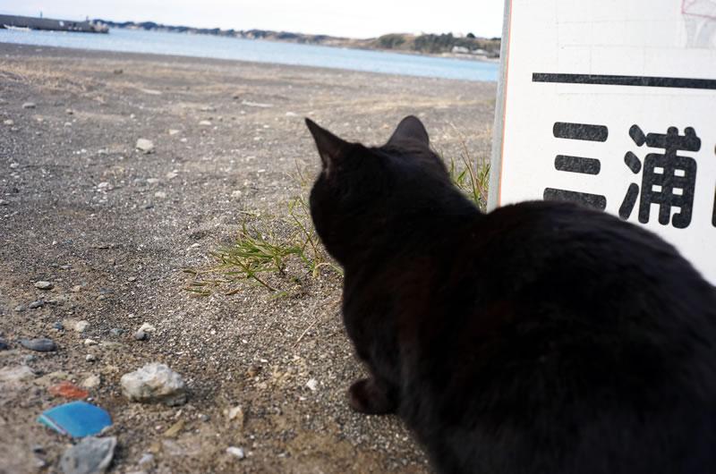 三浦半島の猫  [Sony α7 + Canon Lens 35mm F1.5]
