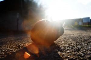 ロードバイクで猫と出会った三浦半島