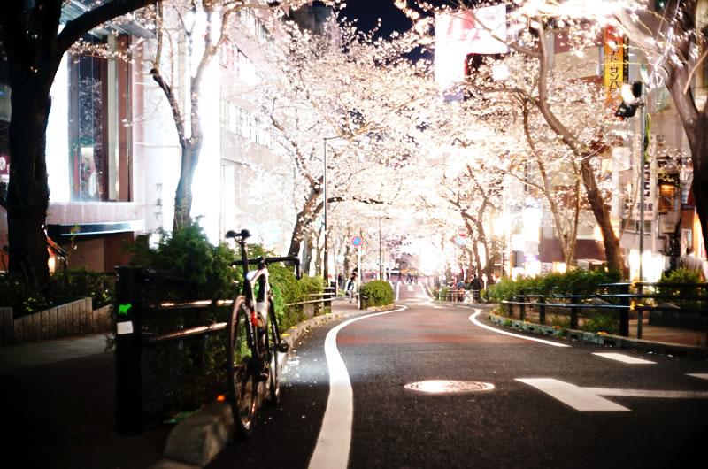 渋谷駅から1~2分の桜並木!