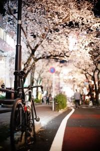 桜丘町の桜は渋谷のオアシス^^