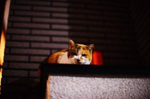 ニコンD800で夜の猫を撮ってみた