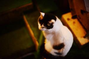 猫、かわいいよ、猫