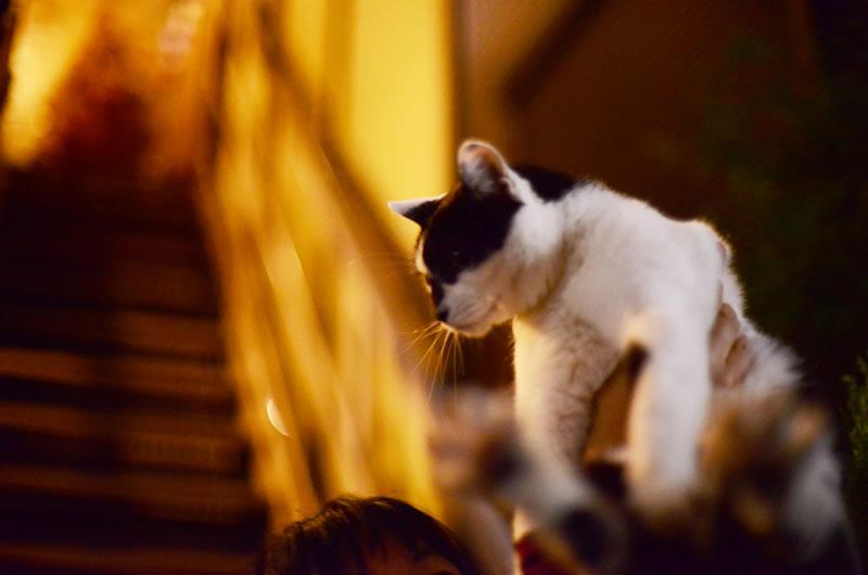 猫を抱っこできるなんて、羨ましい・・・
