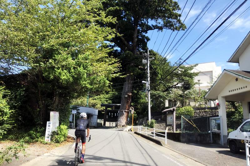 寄神社の大杉(iPhone7)