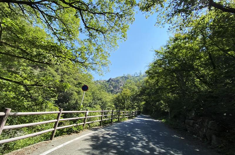 木々に覆われて涼しい昇仙峡