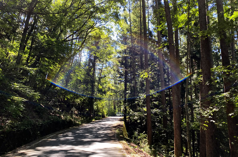 クリスタルラインは木々に覆われて夏でも涼しい