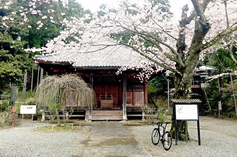 法蓮寺の大日堂も桜満開!