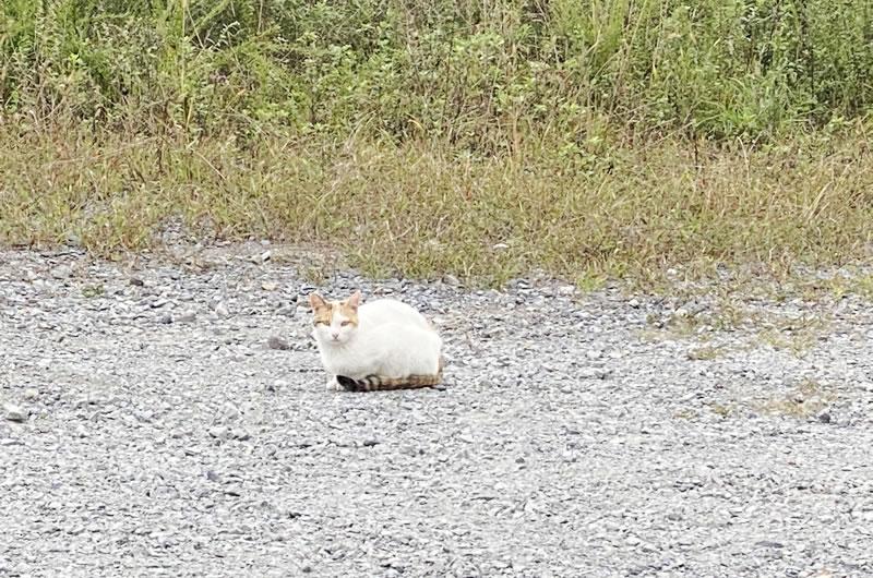 長野県で出会った猫