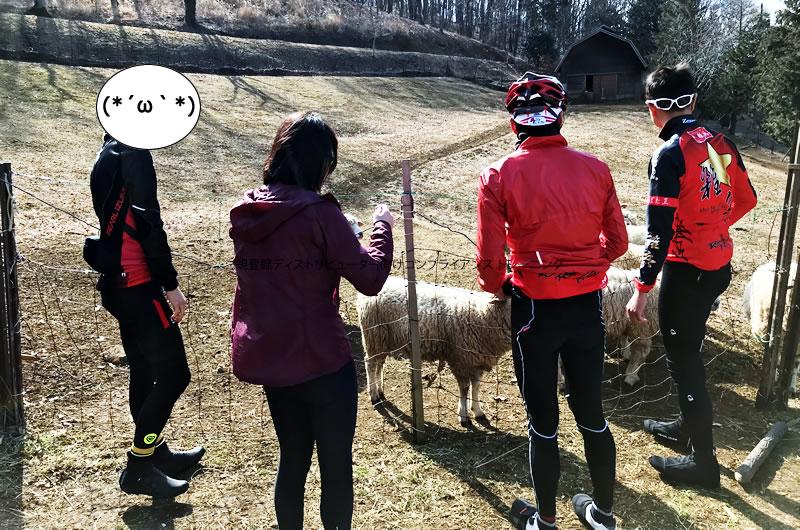 めん羊の里・木里館で放牧されている羊を見て、少し複雑な気持ちに