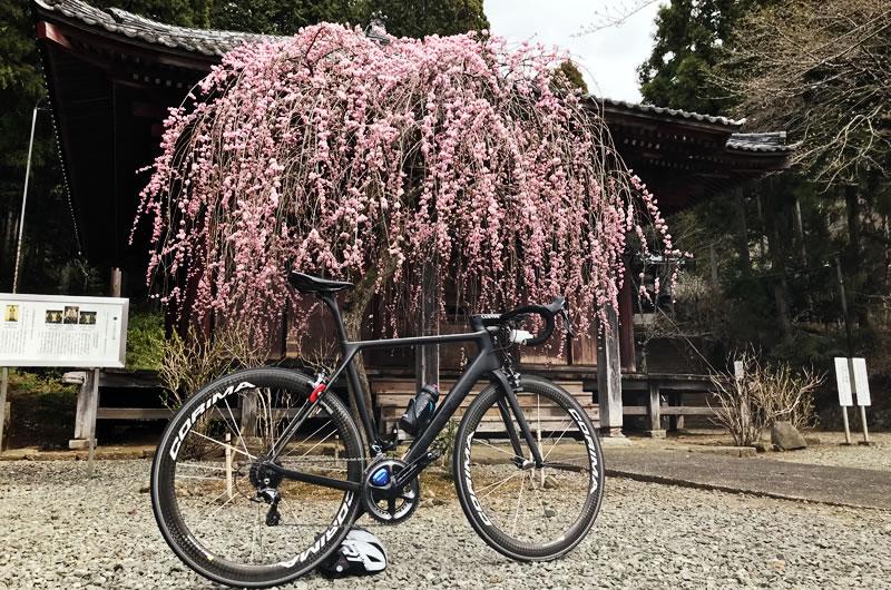 蓑毛大日堂のしだれ桜が見事(*´ω`*)