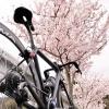秦野の桜とグルメを開拓&満喫してきた!