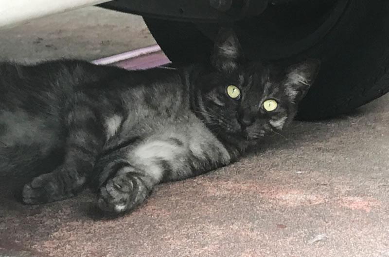 猫に会えたの(*´ω`*)