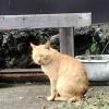 猫に会いに、ちょっとヤビツまで