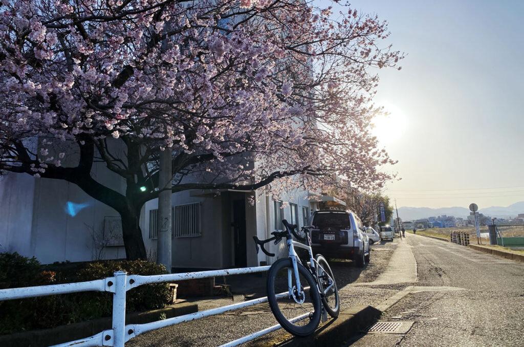 東京にも桜の便りが届きました