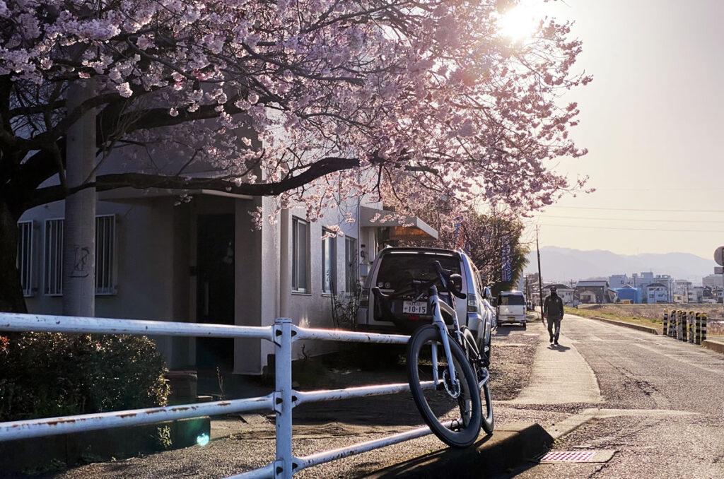 おぉ、桜が咲いてる!